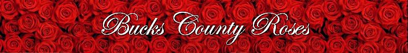 Bucks County Roses