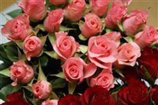 Picture of 12 Pink Sweet Roses