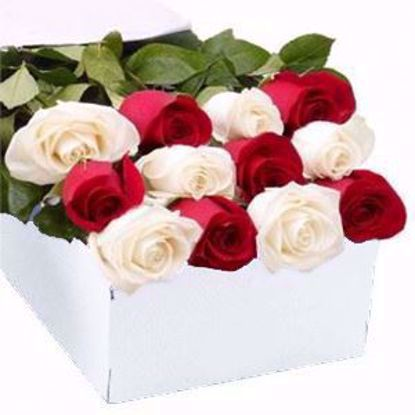 Picture of 6 Red 6 White Tea Roses