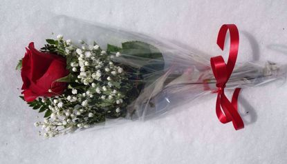 Picture of Single Roses